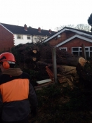Uprooted tree removal