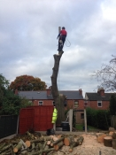 Removal of Ash tree