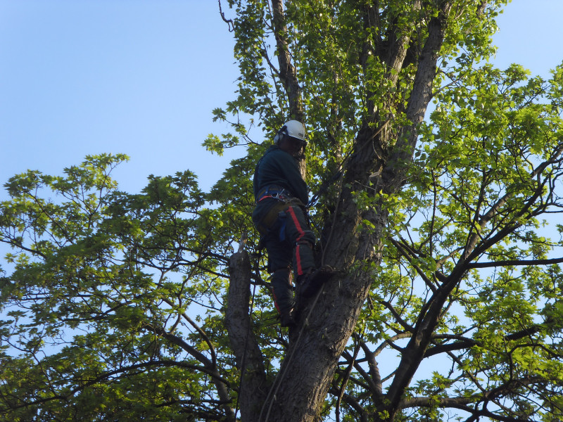 Rays garden services and tree care for Tree and garden services