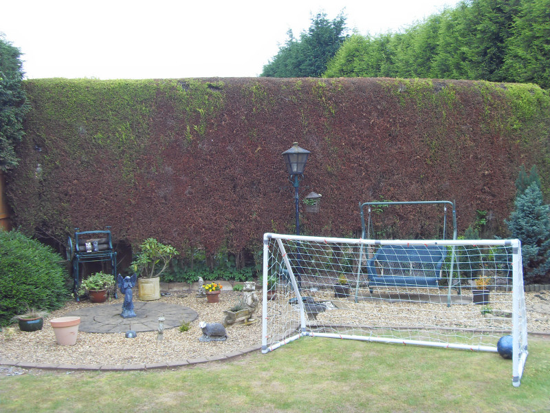 Hedge to be removed